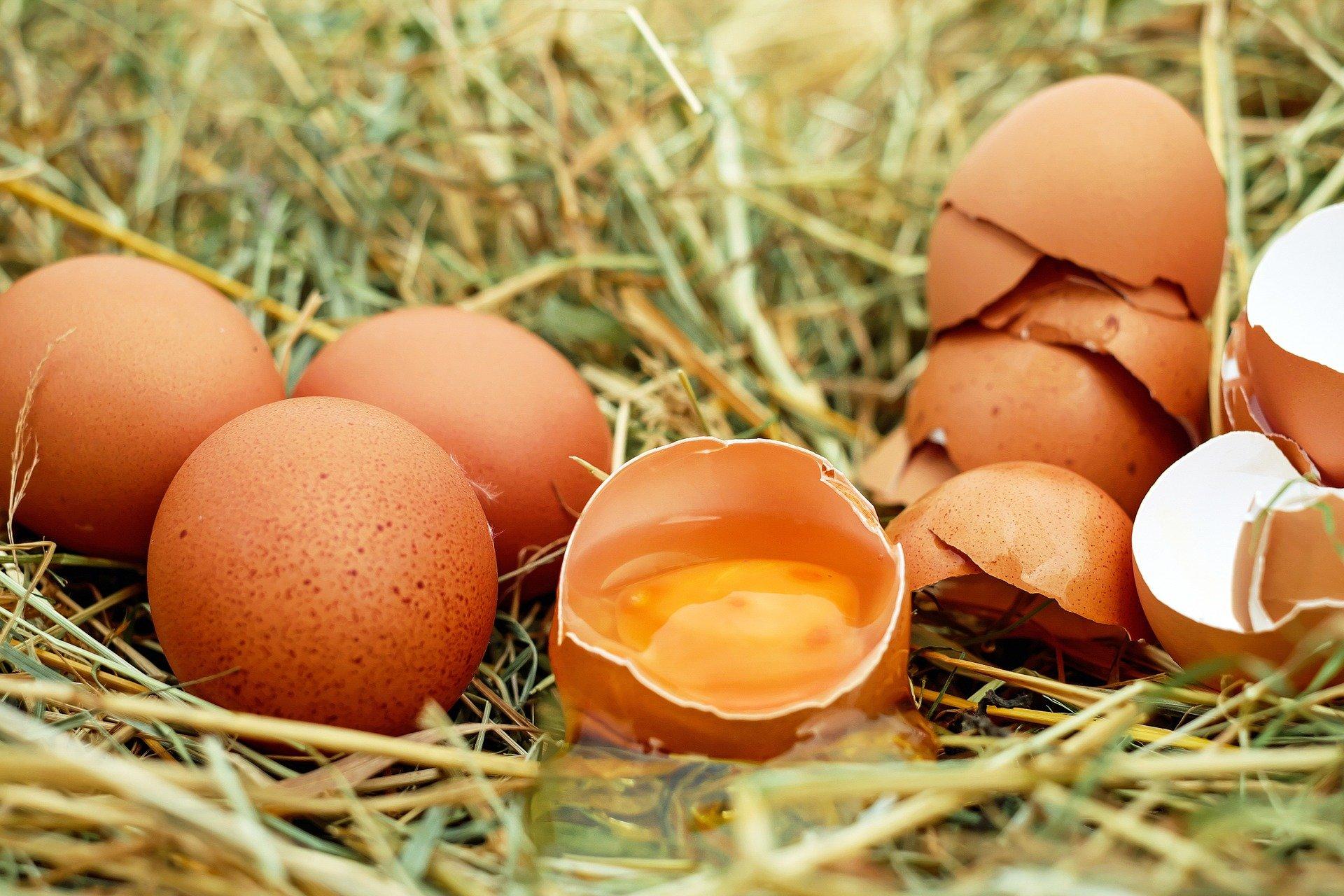 eggs 1510449 1920